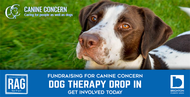 Dog Therapy Drop In - Fundraising for Canine Concern
